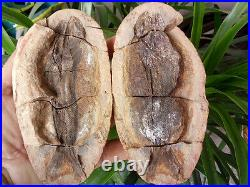 773 g Both sides of the fish well-preserved Million Year Old fish fossils 6822