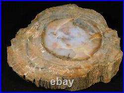 A BIG! 211 Million Year Old! Polished Petrified Wood Fossil From Arizona 2717gr
