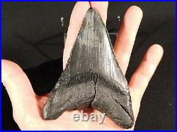 A BIG! FOUR Million Year Old Carcharocles MEGALODON Shark Tooth Fossil 209gr