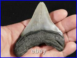 A FOUR Million Year Old! MEGALODON Shark Tooth Fossil 63.7gr