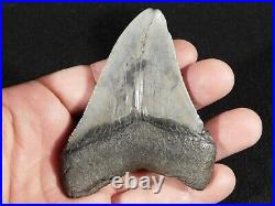 A FOUR Million Year Old! MEGALODON Shark Tooth Fossil 71.6gr