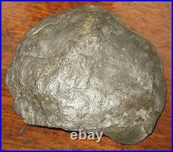 A quality Stone / Fossils Ammonite polished Fossil 350 million years old