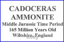 Ammonite Cadoceras Fossil England 165 Million Years Old #16310 26o