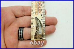 Authentic Tyrannosaurus Rex Tooth 70/65.5 Million Years Old Hell Creek Forma