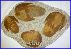 FOUR (4) HUGE RARE Moroccan TRILOBITES Fossil, Plate, Cambrian 500 Million years