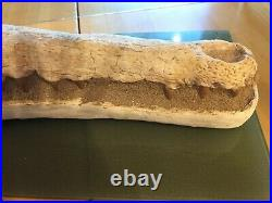 Fossil Crocodile Jaw and Skull. 65.5-145.5 million years old. Cretaceous Period