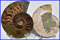 Fossil PAIR Ammonite with Crystals XXXLRG 8.6 110 million years old 221mm 2698xx