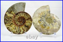 Fossil PAIR Ammonite with Crystals XXXLRG 8.6 110 million years old 221mm e4247xx