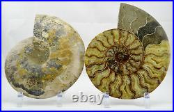 Fossil PAIR Ammonite with Crystals XXXLRG 8.8 110 million years old 222mm e4244xx