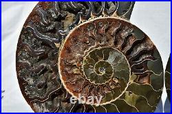 Fossil PAIR Ammonite with Crystals XXXLRG 9.2 110 million years old 230mm 2687xx