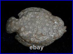 GEM QUALITY Fossil Coral CARVED FISH20 Million year old Fossil CoralSumatra