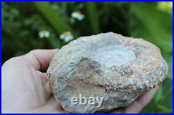 Genuine Fossil Ammonite spiral shell, 400-65 million years BC