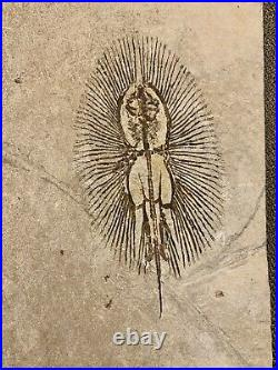 Lebanon Fossil, Excellent Quality Cyclobatis-Ray, Cretaceous, 100 Million Years