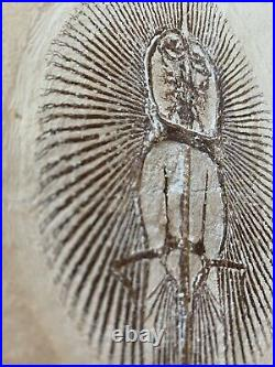 Lebanon Fossil, Female Cyclobatis-Ray From Haqil, Cretaceous, 100 Million Years