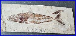 Lebanon Fossil, New species and Primigatus from Haqil, 100 million Years