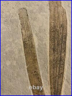 Lebanon Fossil, Sapindopsis Cretaceous Leaves, 100 Million years