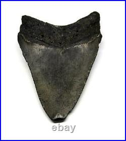 MEGALODON TOOTH Fossil SHARK 3.837 inches -Up to 25 Million Years Old #15584 11o