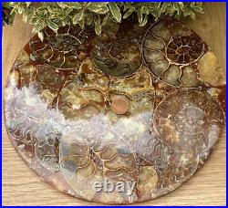 Massive 10 (2LB) Natural Crystal Formed Ammonite Fossil 416 Million Years Old