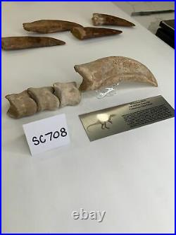 Massive Spinosaurus Dinosaur Claw and Finger Digits 100 Million Years Old