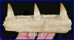Natural 100 Million YEAR Old! Mosasaur JAW Fossil With THREE Teeth! 334gr