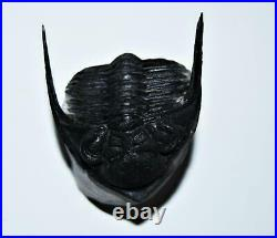 Odontochile TRILOBITE Fossil Morocco 400 Million Years old #13824 17o