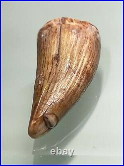 Pterosaur fossil anterior tooth Lower Cretaceous (110 million years ago)
