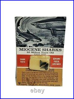 Rare 1963 MIOCENE SHARKS teeth tooth 30 MILLION YEARS OLD AUTHENTICATED FOSSIL