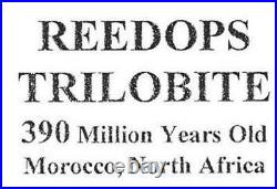 Reedops TRILOBITE Fossil Morocco 390 Million Years old #15728 15o