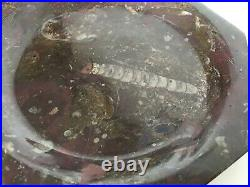 SET of THREE 3 pcs Specimen Fossil Marble Plates 380 Millions Years Old