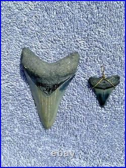 Shark Tooth Megalodon 30 to 2 million years old