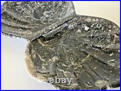 Specimen Fossil Marble Dish 380 Millions Years Old Fossil Inclusions