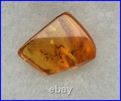 Spider In Baltic Amber, 40 Million Years Old #3693
